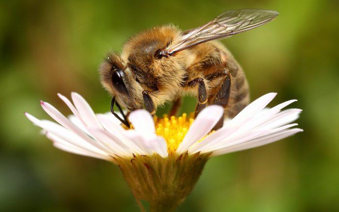пчелка прицепы