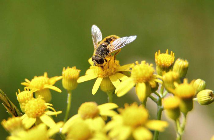 прицеп для пчелы