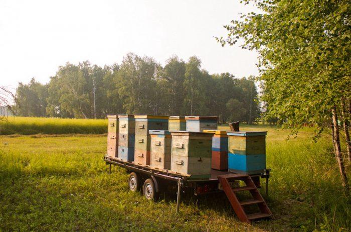 тандем пчеловоз